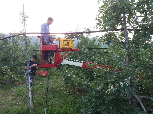 사과나무 도장지 정리