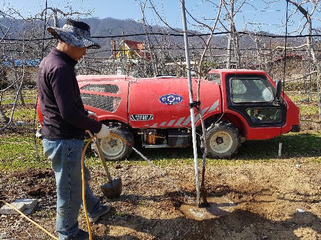 묘목나무 물주기 작업