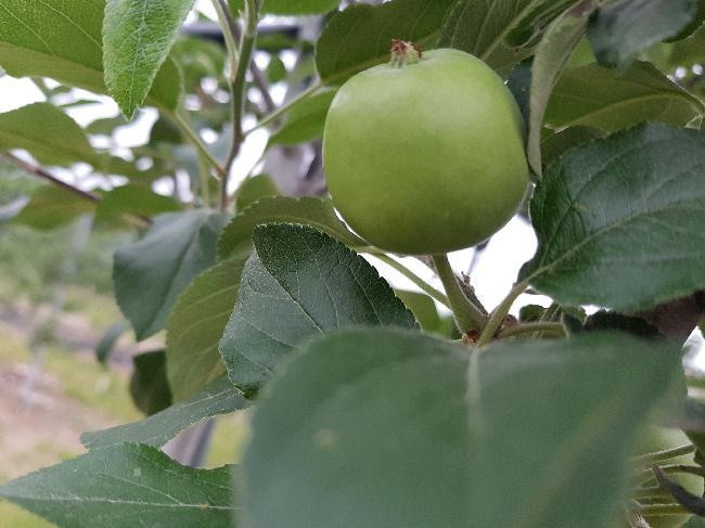 농원에 열매들