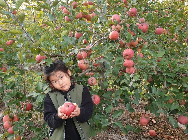 손녀와 사과